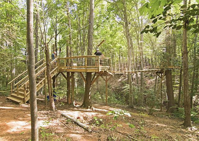 Tree platform with rope bridge.