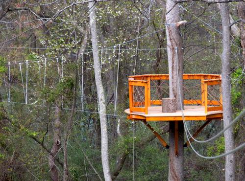 Canopy tour tree platform.